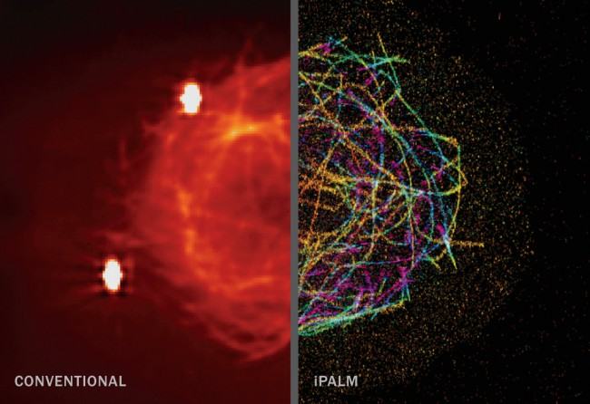 PALM microscopy allows researchers to illuminate a subset of molecules in a sample and eliminate overlapping fluorescence that would blur details. iPALM (interferometric PALM) provides images in 3-D. Harald Hess also works at Janelia Farm Research Campus/HHMI, like Eric Betzig. Credit: J.A. Galbraith, G. Shtengel, H.F. Hess and C.G. Galbraith/NINDS/NIH, Janelia Farm Research Campus/HHMI and NICHD/NIH