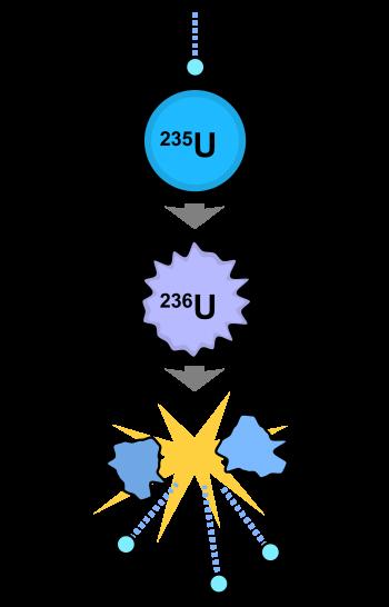So funktioniert Kernspaltung: oben sieht man ein freies Neutron, das gleich vom Kern eines Uranatoms aufgenommen wird (U-235). In der Mitte haben die beiden ein instabiles Uran-Isotop gebildet (U-236).  Dieses teilt sich in zwei kurzlebige Barium- bzw. Krypton-Isotope (Ba-141 und Kr-92), zudem werden drei weitere freie Neutronen und eine Menge Energie freigesetzt. Grafik: Fastfission, public domain