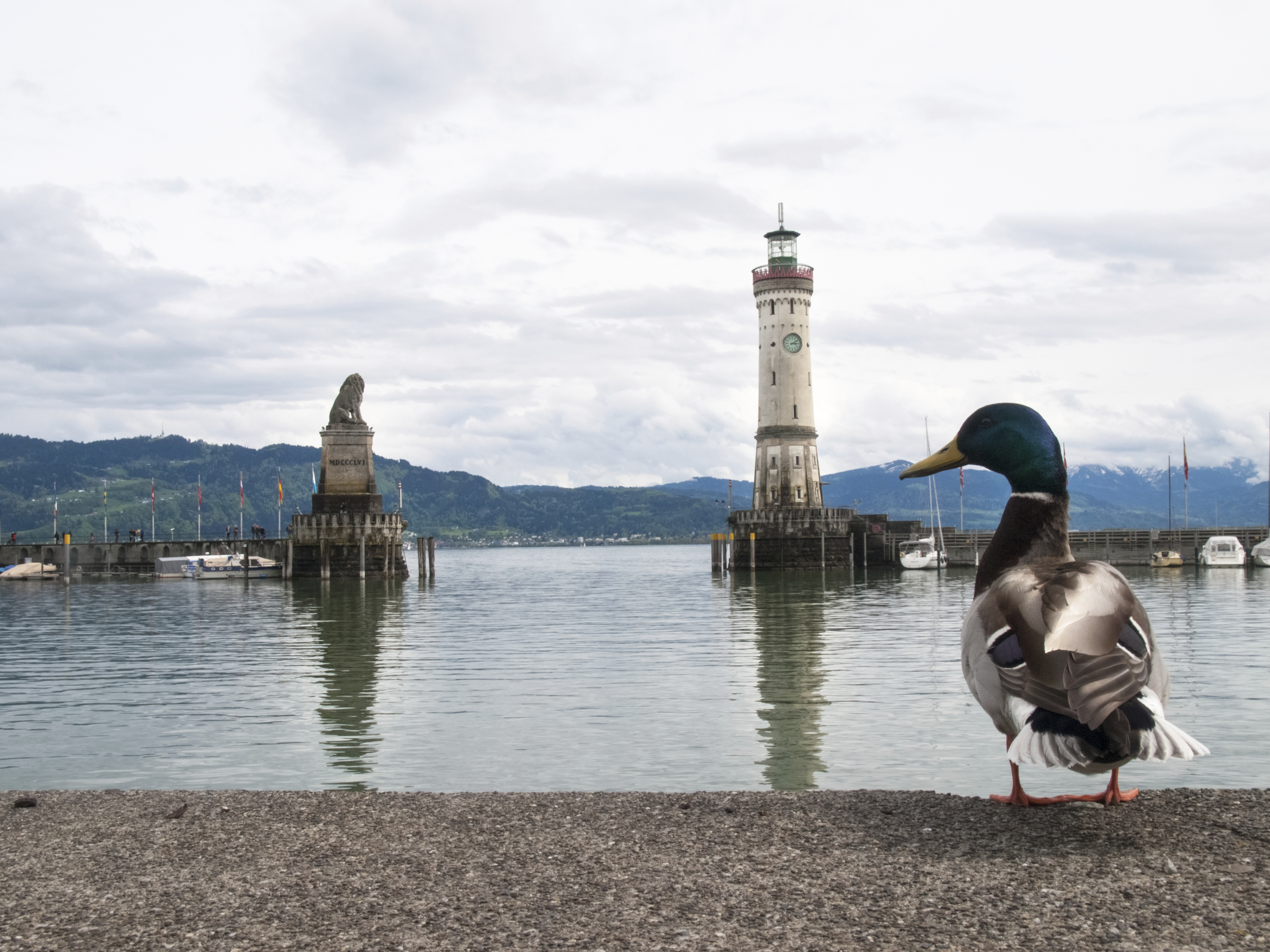 Lindau Harbor - a sight to behold, not only for our feathered friends. Photo: iStock.com/Mor65