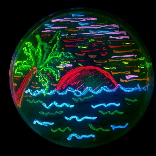 Kunst aus der Petrischale: Mit verschiedenen fluoreszierenden Bakterien hat Nathan Shaner im Jahr 2006 im Labor von Roger Tsien in San Diego eine Strandszene in eine Petrischale 'gemalt'. Verwendet werden Farbstoffe, die auf dem GFP-Gen basieren, sowie Korallenfarbstoffe. Photo: Paul Steinbach, Credit: Nathan Shaner, CC BY-SA 3.0