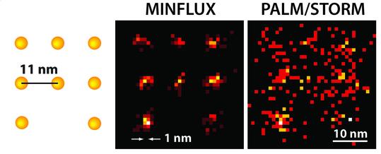 Mit dem MINFLUX-Mikroskop lassen sich Moleküle optisch trennen, die nur wenige Nanometer voneinander entfernt sind. Links die schematische Darstellung fluoreszierender Moleküle. Während PALM/STORM bei gleicher Molekül-Helligkeit nur ein diffuses Bild liefern kann (rechts), ist die Anordnung der Moleküle mit dem MINFLUX-Mikroskop (Mitte) klar zu erkennen. Abbildung: Klaus Gwosch, Max-Planck-Institut für biophysikalische Chemie