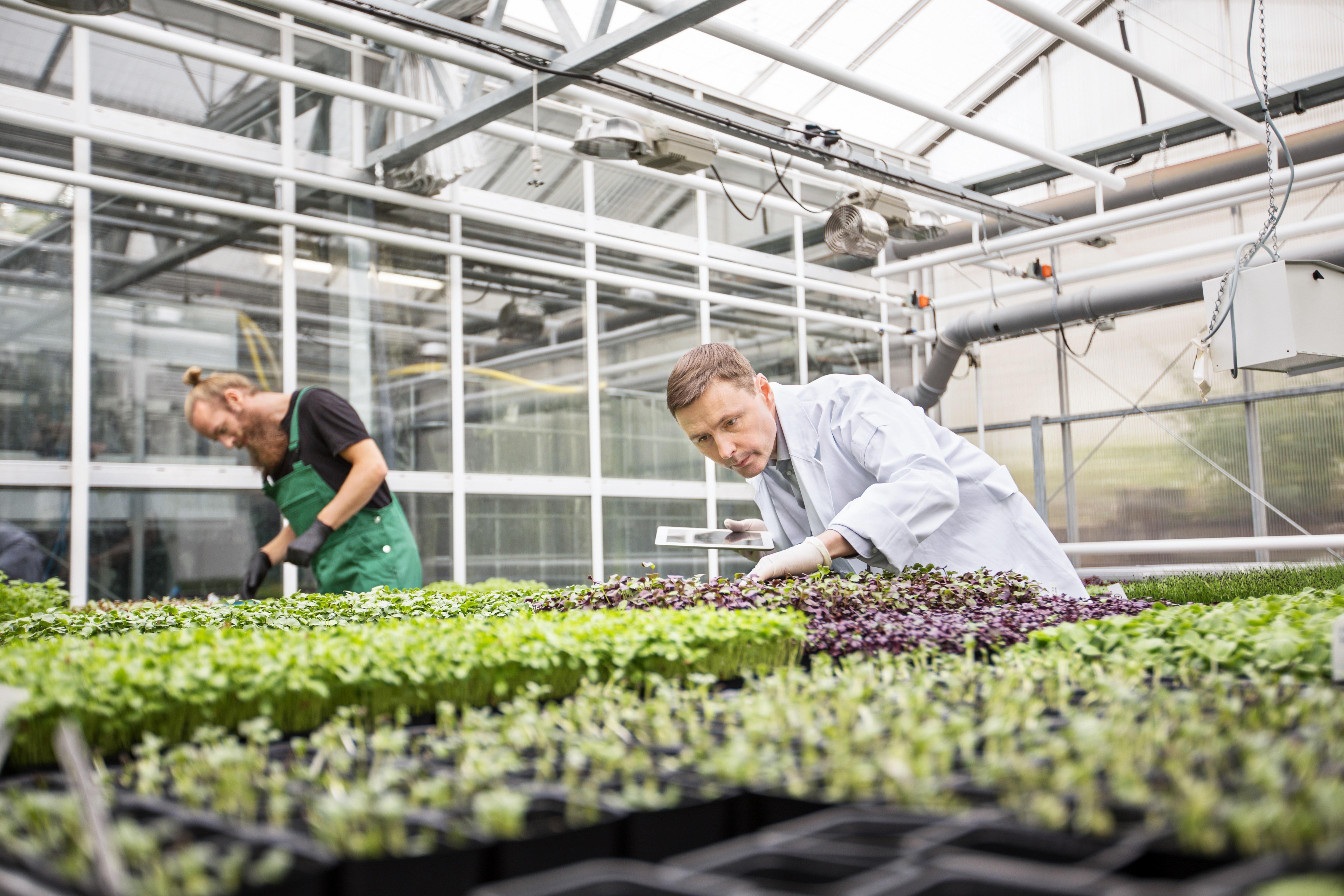 Seit Jahrzehnten versucht die Forschung die Mechanismen der Photosynthese aufzuklären. Forscher nutzen diese Erkenntnisse jetzt, um Ernteerträge zu steigern und so die Zukunft unserer Nahrungsmittelversorgung zu gewährleisten. Credit: alvarez/iStock.com