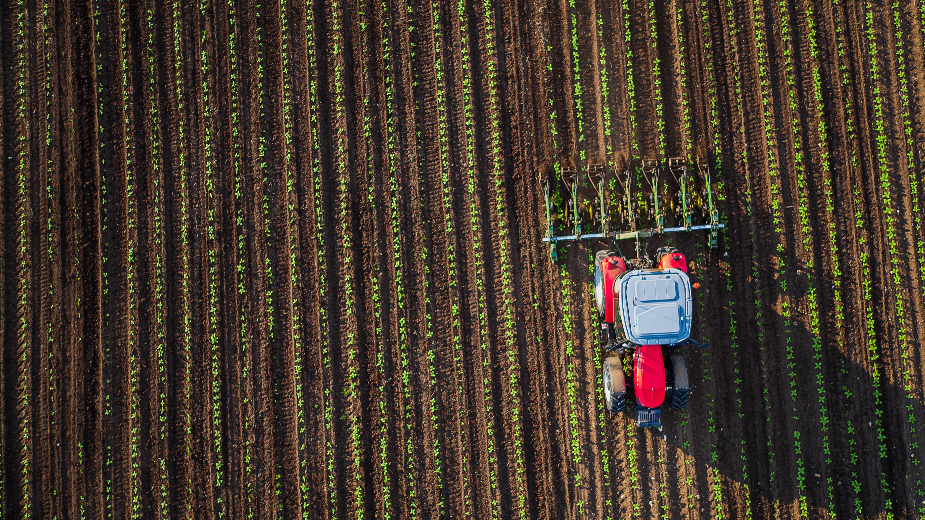 Zwar hat die Effizienz der landwirtschaftlichen Produktion in den letzten Jahrzehnten enorm zugenommen, allerdings sieht es so aus, als wenn die heutigen Ernteerträge kaum noch steigerungsfähig sind. Um den stetig wachsenden Bedarf befriedigen zu können, müssen dringend neuartige Lösungen her. Credit: valio84sl/iStock.com