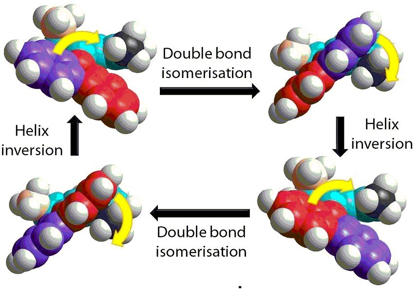 So funktioniert die molekulare Rotation: auf eine Doppelbindungs-Isomerisierung folgt jeweils eine Helix-Inversion durch Hitze. Grafik: Ben Feringa research group. Quelle: Königlich-Schwedische Akademie der Wissenschaften