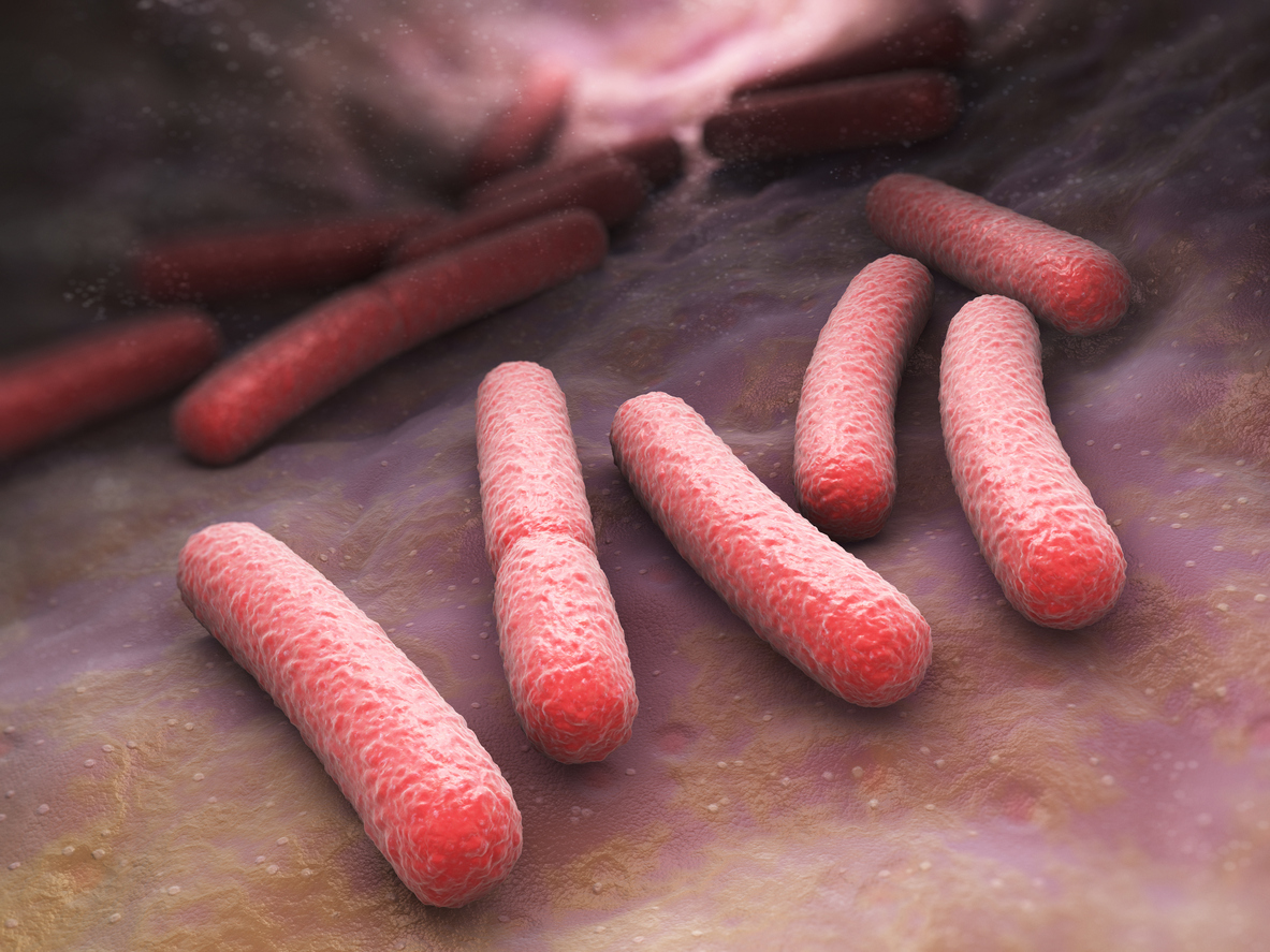 In sync: gut bacteria and our circadian clock. Picture/Credit: iLexx/iSTock.com