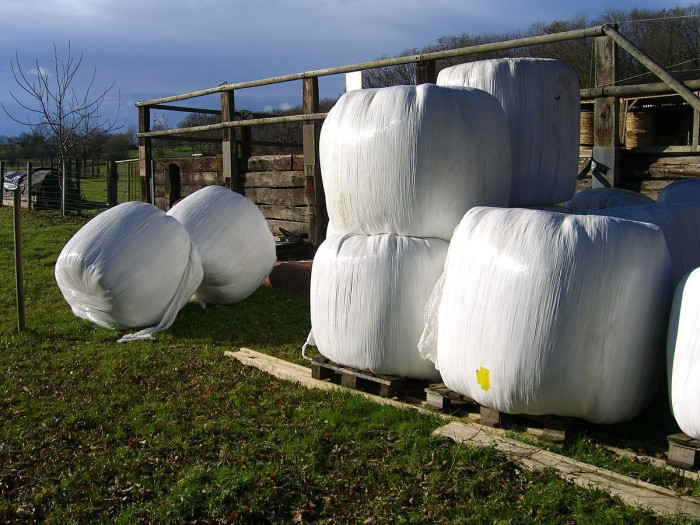 Bale silage near Basel, Switzerland. No special containers are needed for silage - any sheeting, air-tight pile or sheet will do. Photo: patpatpat, Wikimedia CC license