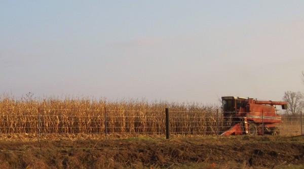 Maisernte in Iowa, der Kornkammer der USA. Im Jahr 2014 ernteten US-Bauern 361 Million Tonnen Mais, der Großteil war gentechnisch verändert. Foto: Bill Whittaker, CCL 3.0