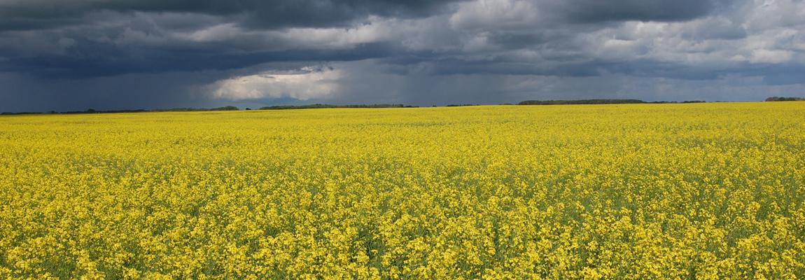 Die Zukunft der Landwirtschaft