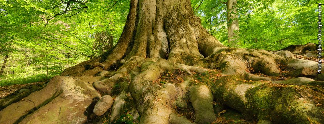 Plant intelligence – Our 5 senses + 15 more