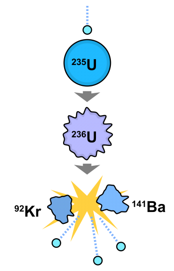 Theory of nuclear fission: a neutron is about to be captured by the nucleus of a uranium (U-235) atom. Below, the neutron has been absorbed and briefly turned the nucleus into a highly excited U-236 atom. Next, the U-236 atom has fissioned, resulting in two short-lived isotopes of barium and krypton (Ba-141 and Kr-92), plus three neutrons, all with very large amounts of kinetic energy. Image: Fastfission, public domain