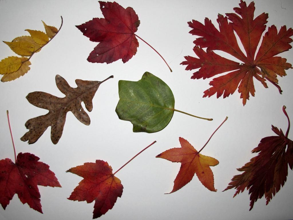 Different plant leaves. Photo: Flickr/ © CC 2011 Kristine Paulus