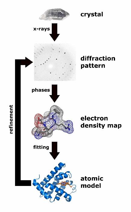 Die Struktur eines Proteins mit Hilfe der Röntgenstrukturanalyse zu ermitteln ist ein aufwändiges Verfahren: Zunächst einmal muss das Protein kristallisiert werden, das ist bei Membranproteinen besonders schwierig. Dann wird mit Röntgenstrahlen ein Beugungsbild erstellt (diffraction pattern). Mit fortgeschrittener Analysis wird aus diesem Bild eine Elektronendichtekarte ermittelt, schließlich kann auch eine Struktur des Moleküls errechnet werden. Grafik: Thomas Splettstoesser, www.scistyle.com, CC BY-SA 3.0