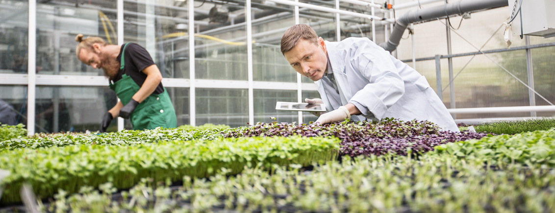 Boosting Photosynthesis to Meet Rising Food Demand
