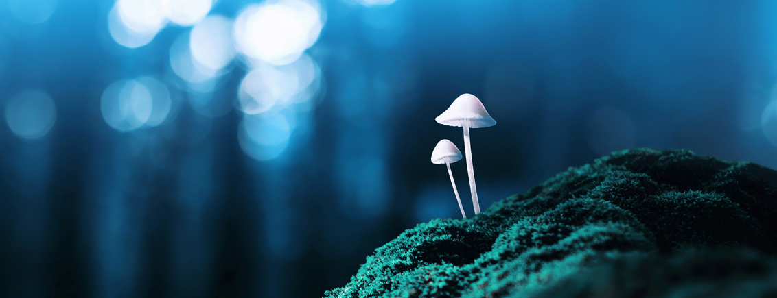 "Psilocybin, a psychedelic substance found in ""magic mushrooms"", has shown promise in tackling treatment-resistant depression and in alleviating the anxiety and depressive symptoms of cancer patients. Picture/Credit: Misha Kaminsky/iStock.com"