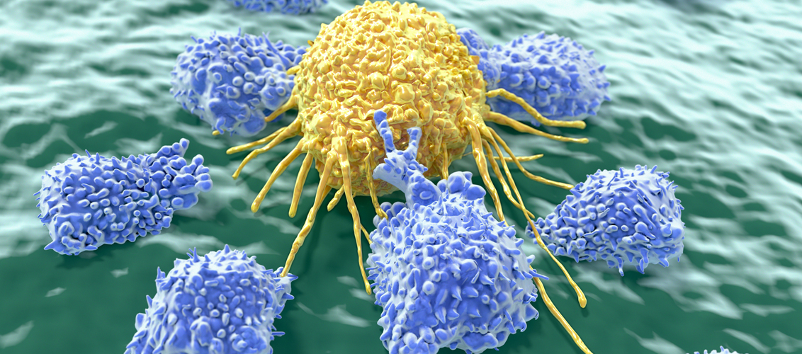 Lymphocytes attacking cancer cell. Credit: selvanegra/iStock.com