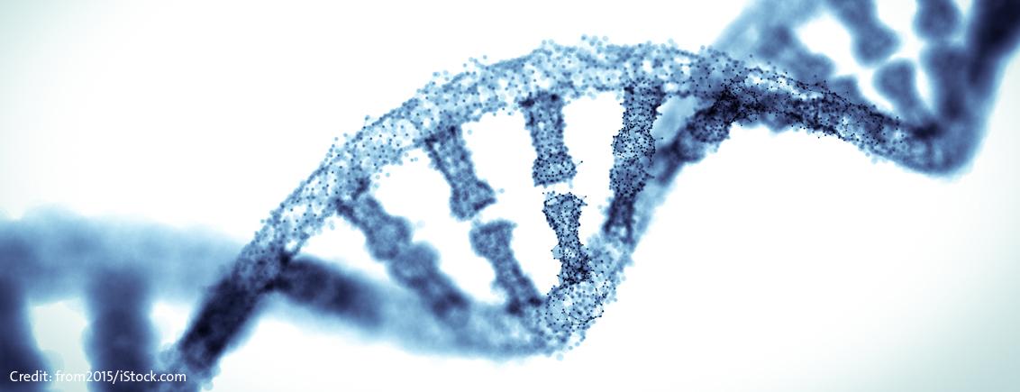 Der 3D-Code des Genoms