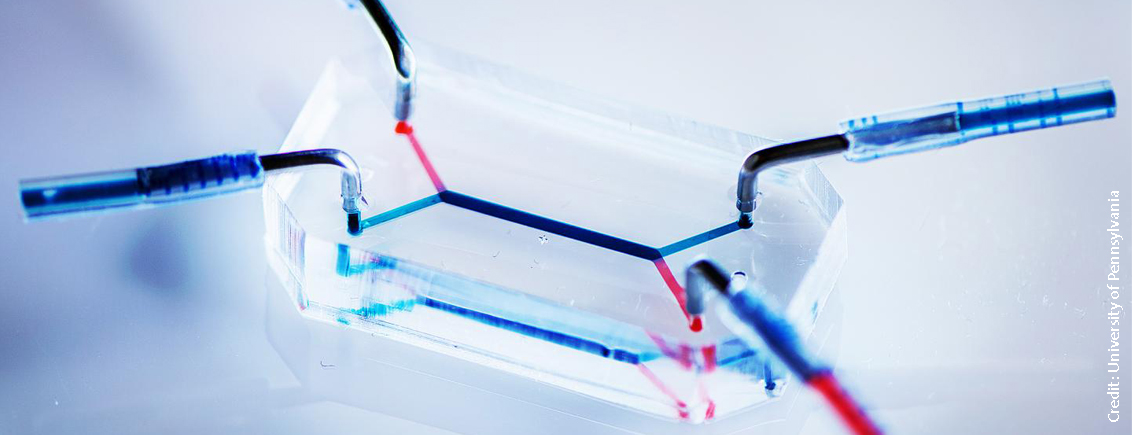 Organs-On-A-Chip: The Future of Drug Testing?