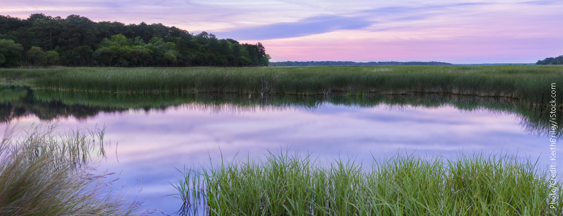 Marshland Restoration Counteracts Climate Change