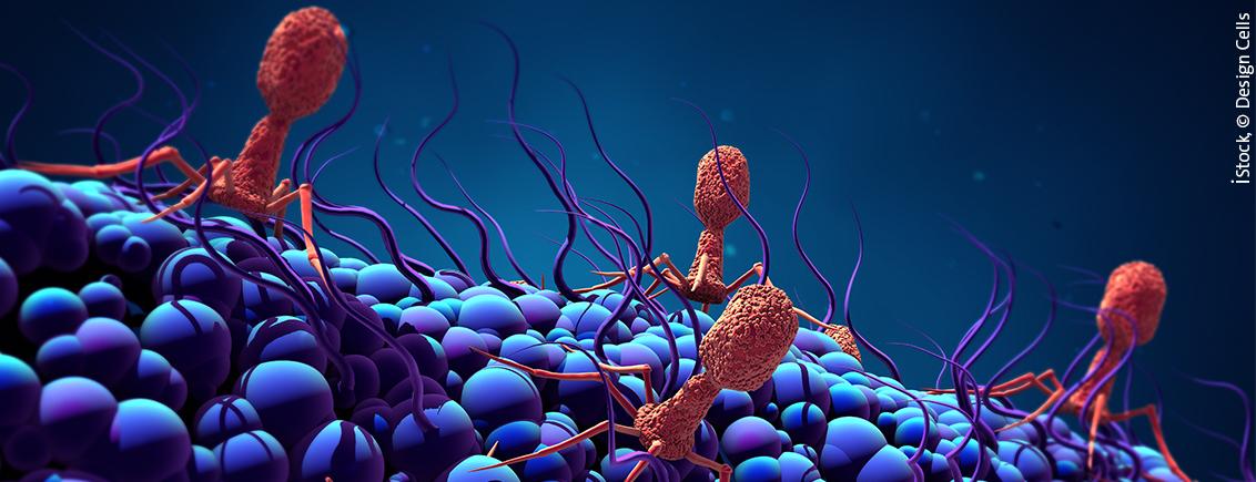 Nobelpreis für Chemie 2018 – Die Evolutionäre Geschichte von Enzymen und Antikörpern