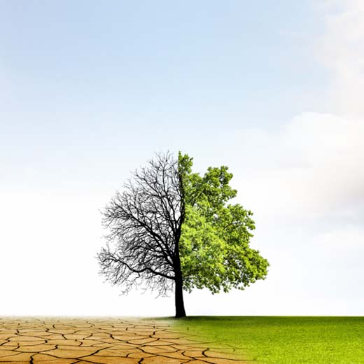 Tackling Climate Change: Low Hanging Fruit and Hidden Emissions